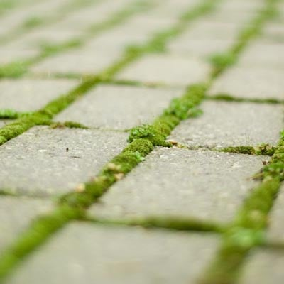 Moss Remover